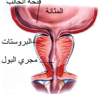 prostat
